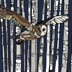 The Owl Jenni Cator
