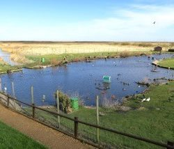 Blakeney Duck Pond