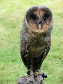 Dusk, Elizabeth's favourite owl