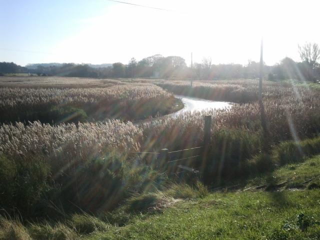 Countryside on the Wildlife walk