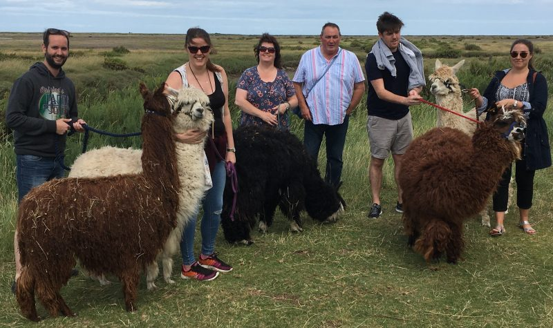 family alpaca trek