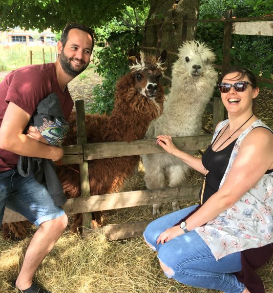 posing with two alpacas